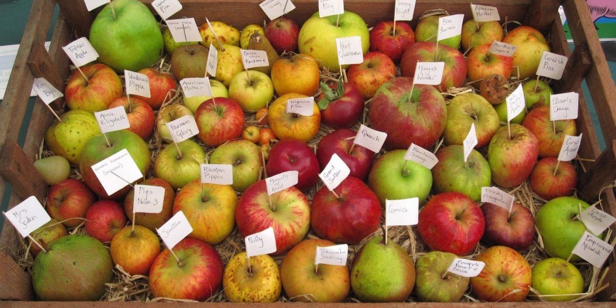 Apple Varieties 2
